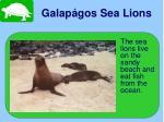 galap gos sea lions