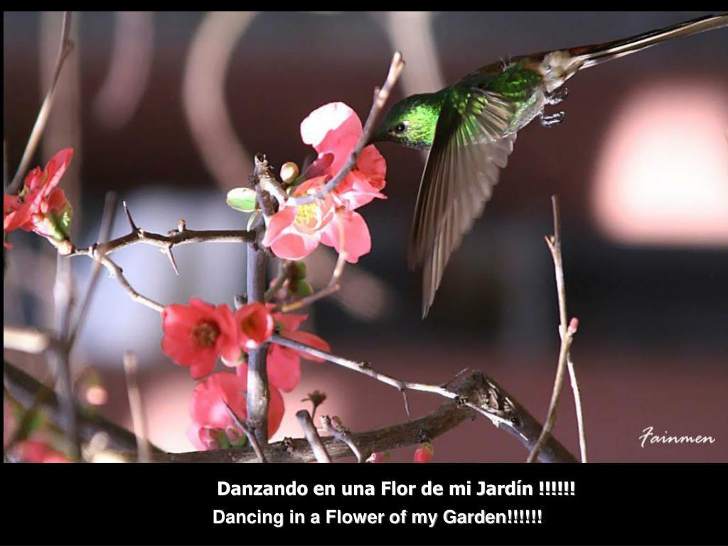 Danzando en una Flor de mi Jardín !!!!!!