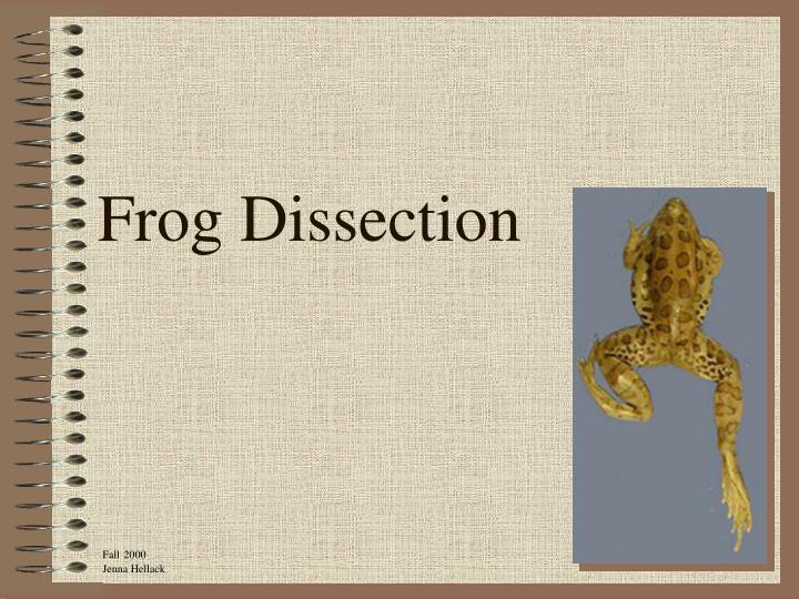frog dissection n.