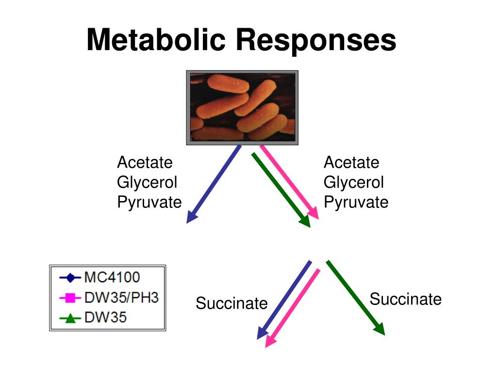 Metabolic Responses
