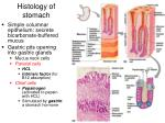 histology of stomach