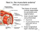next in the muscularis externa aka just muscularis