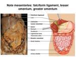 note mesenteries falciform ligament lesser omentum greater omentum