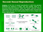 second sexual reproduction54