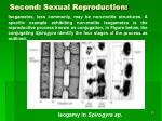 second sexual reproduction55