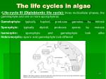the life cycles in algae66