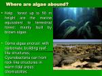 where are algae abound