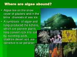 where are algae abound10
