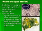where are algae abound9