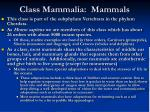 class mammalia mammals
