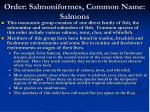 order salmoniformes common name salmons