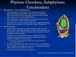 phylum chordata subphylum urochordata