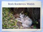 boris badenov webb