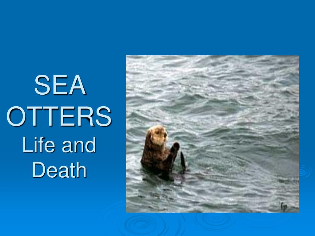 sea otters life and death l.