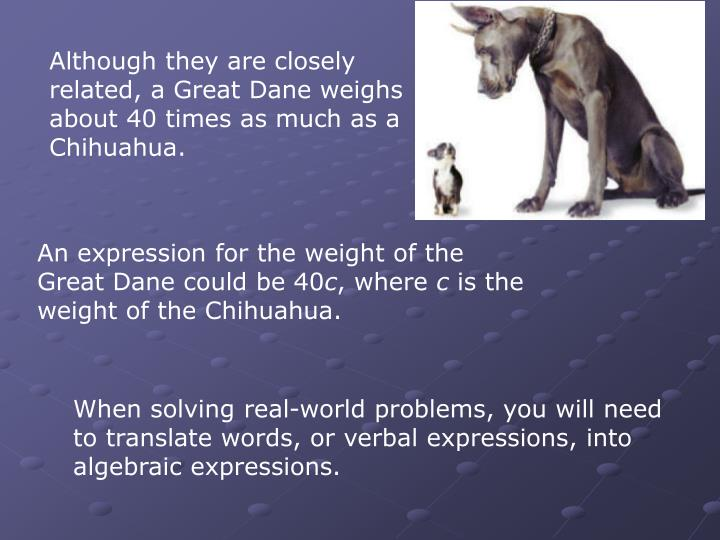 Although they are closely related, a Great Dane weighs about 40 times as much as a Chihuahua.