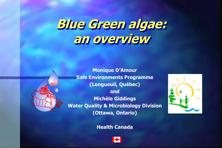blue green algae an overview n.