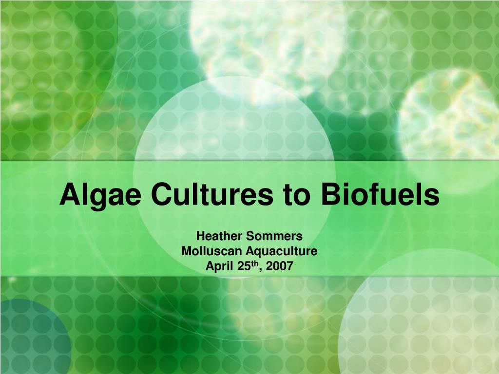 algae cultures to biofuels l.