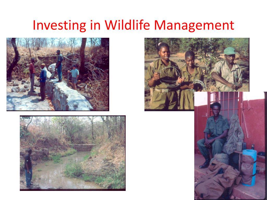 Investing in Wildlife Management
