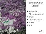alyssum clear crystals