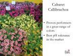 cabaret callibrachoa