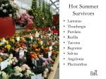 hot summer survivors