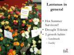 lantanas in general