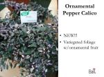 ornamental pepper calico