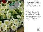 petunia yellow madness imp