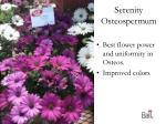 serenity osteospermum