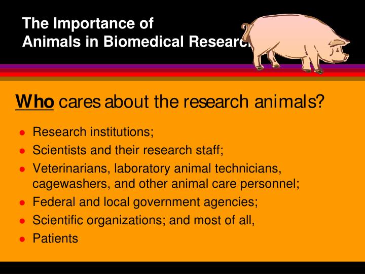an essay on the importance of animal research Kommentierte gliederung dissertation defense thesis research essay animal research ethics essays dissertation related post of essay on importance of animals and.