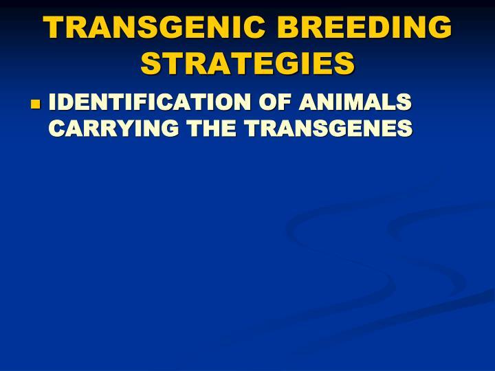 TRANSGENIC BREEDING STRATEGIES