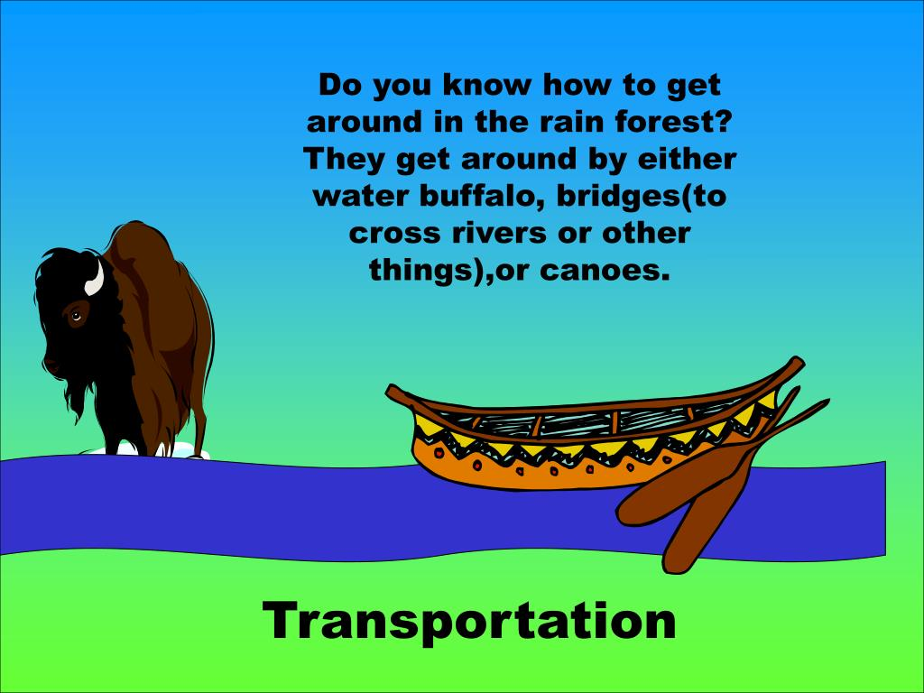 Do you know how to get around in the rain forest? They get around by either water buffalo, bridges(to cross rivers or other things),or canoes.