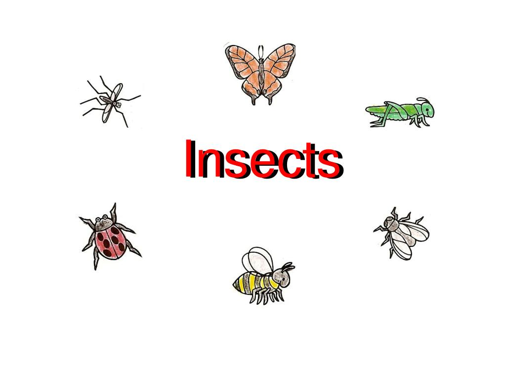 insects l.