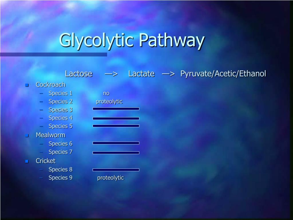 Lactose     —>    Lactate   —>  Pyruvate/Acetic/Ethanol