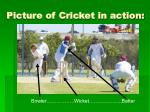picture of cricket in action
