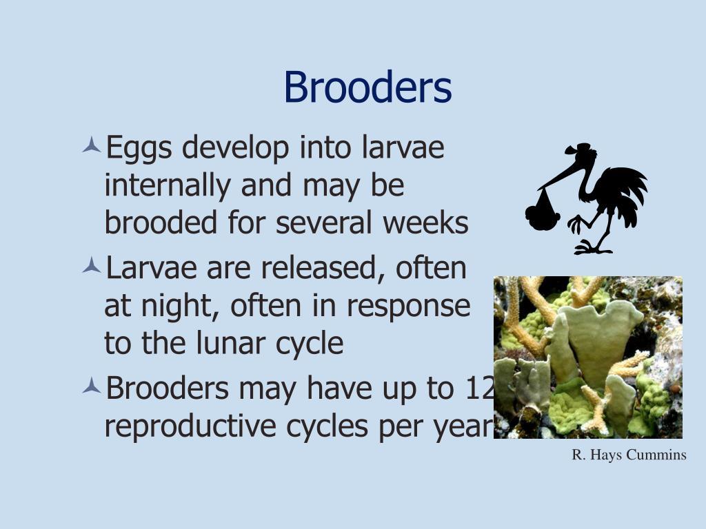 Brooders