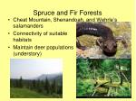 spruce and fir forests