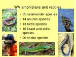 wv amphibians and reptiles