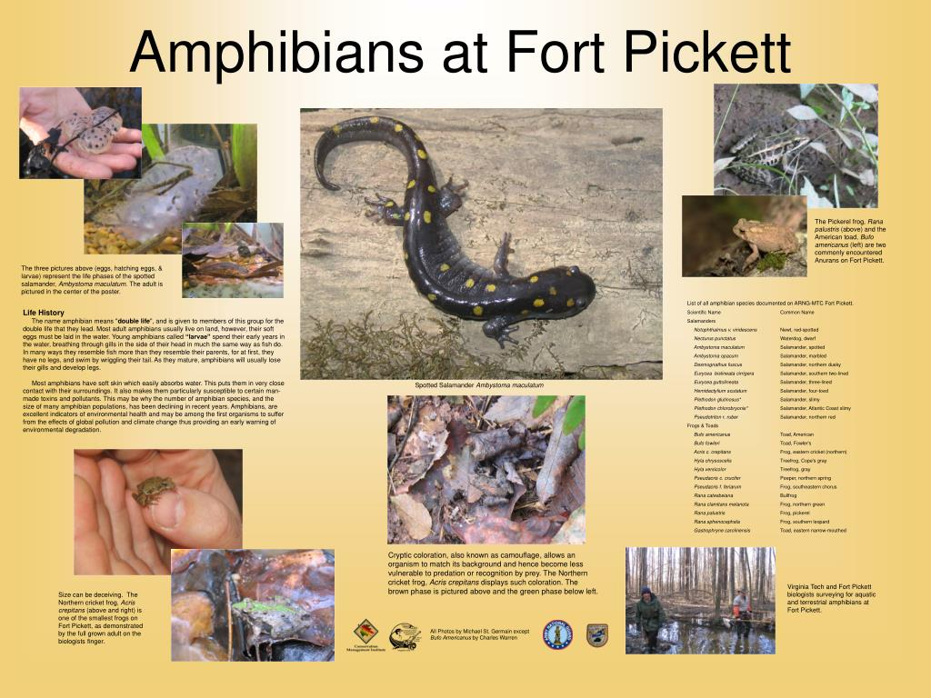 amphibians at fort pickett l.