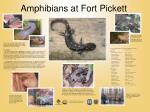 amphibians at fort pickett