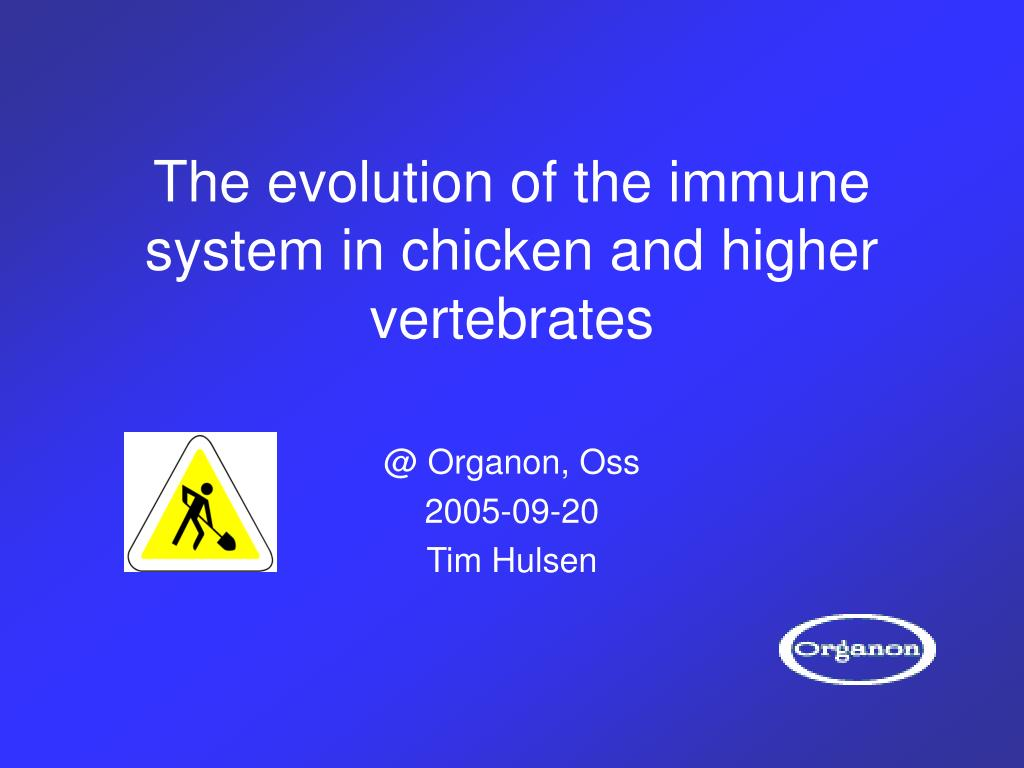 the evolution of the immune system in chicken and higher vertebrates l.