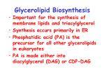 glycerolipid biosynthesis