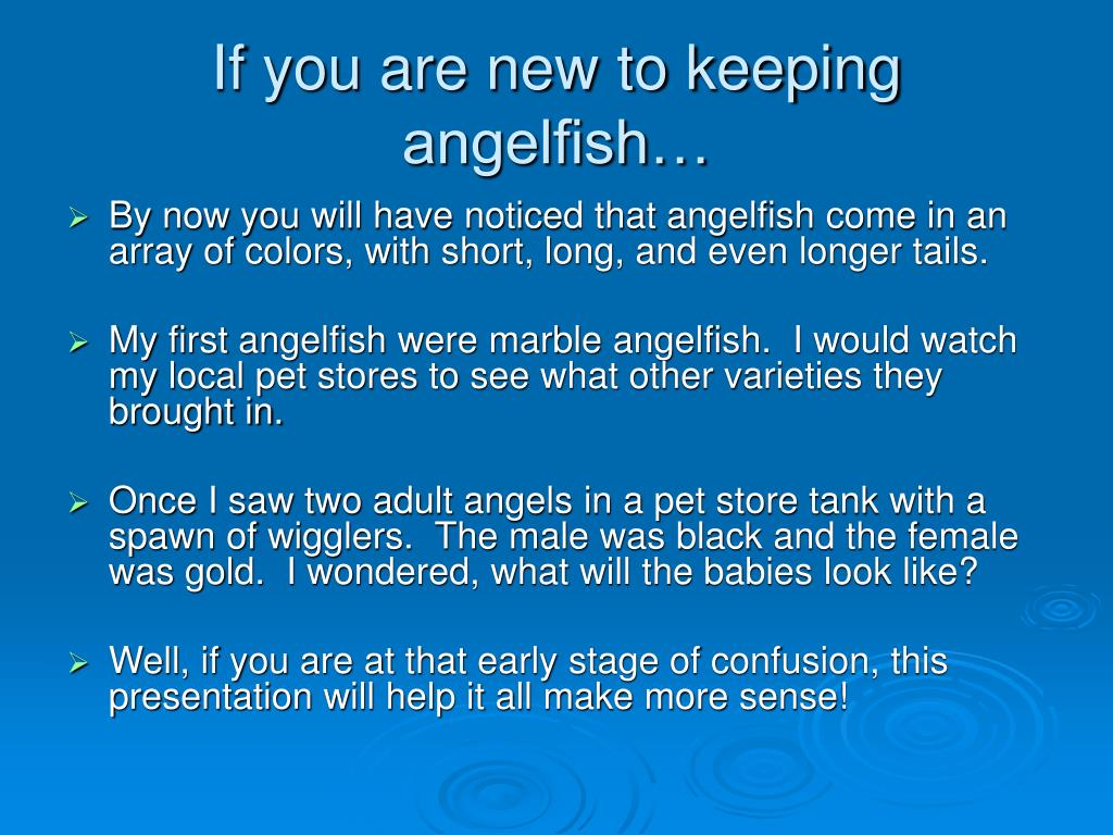 If you are new to keeping angelfish…