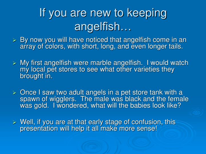 If you are new to keeping angelfish