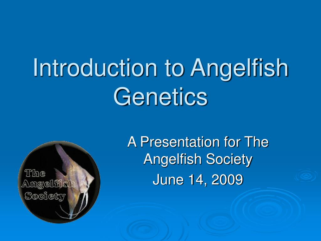 Introduction to Angelfish Genetics