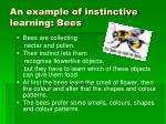 an example of instinctive learning bees