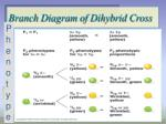 branch diagram of dihybrid cross