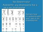 sex determination3
