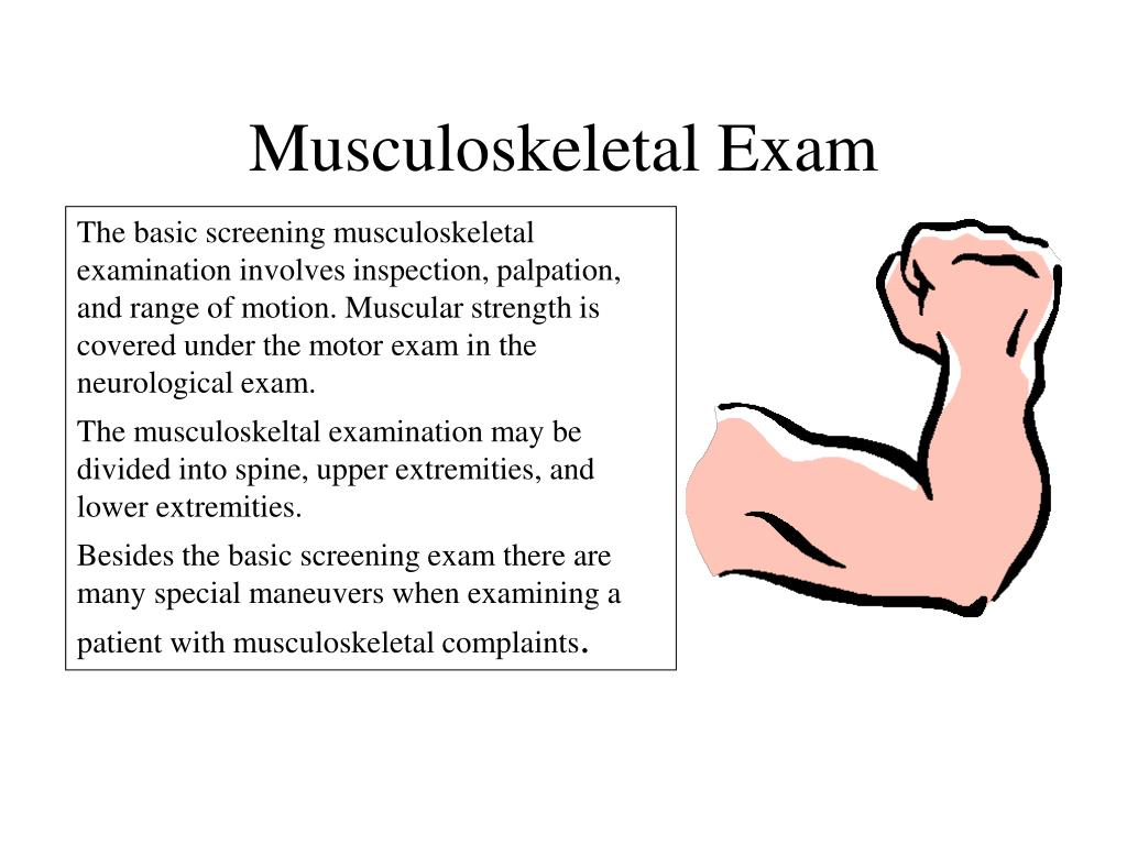 musculoskeletal exam l.