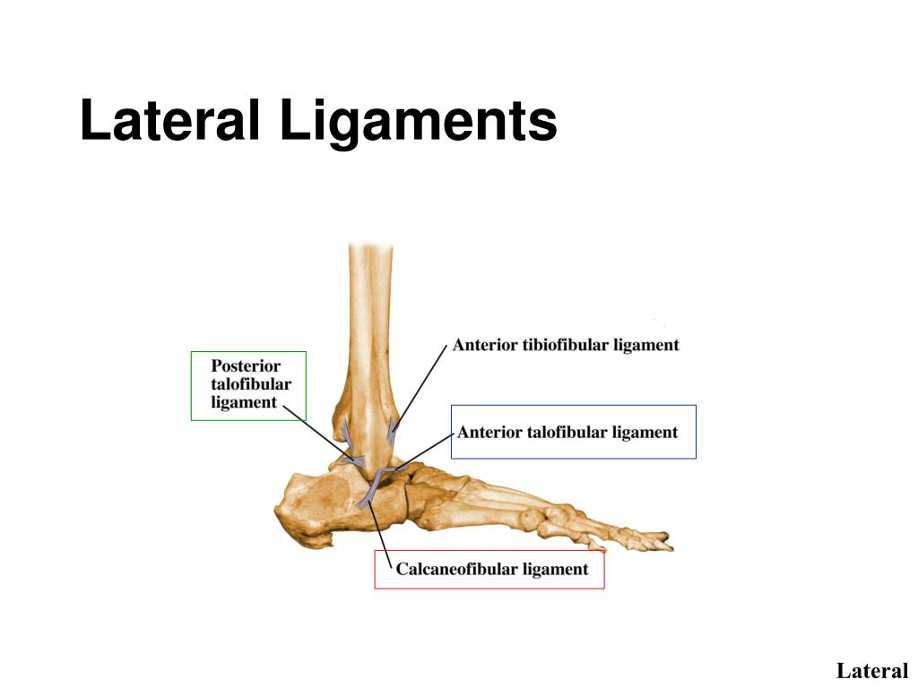 Lateral Ligaments